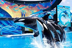 SeaWorld discounts after 3 p.m.
