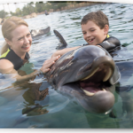 Unlimited admission to SeaWorld with Discovery Cove experience