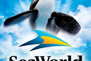Free admission to SeaWorld, Busch Gardens for Military