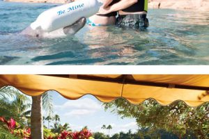 Discovery Cove Romantic Packages