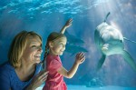 Free SeaWorld Orlando Preschool Pass