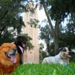 Dog-friendly event at Bok Tower Gardens