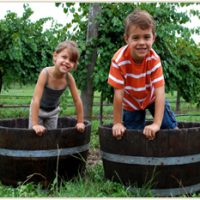 Harvest Grape Stomp