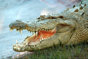 Half off Gatorland tickets for Florida Residents