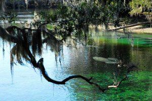 Central Florida Springs