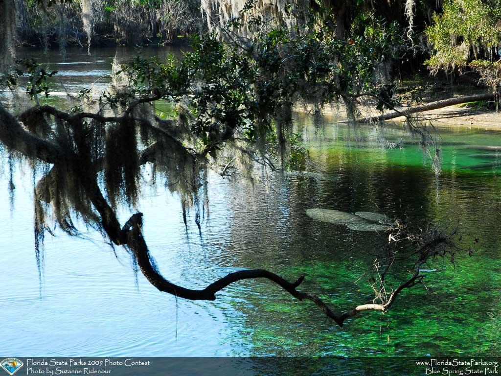 Central Florida Springs Orlando On The Cheap