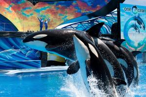 Free SeaWorld Orlando passes for teachers