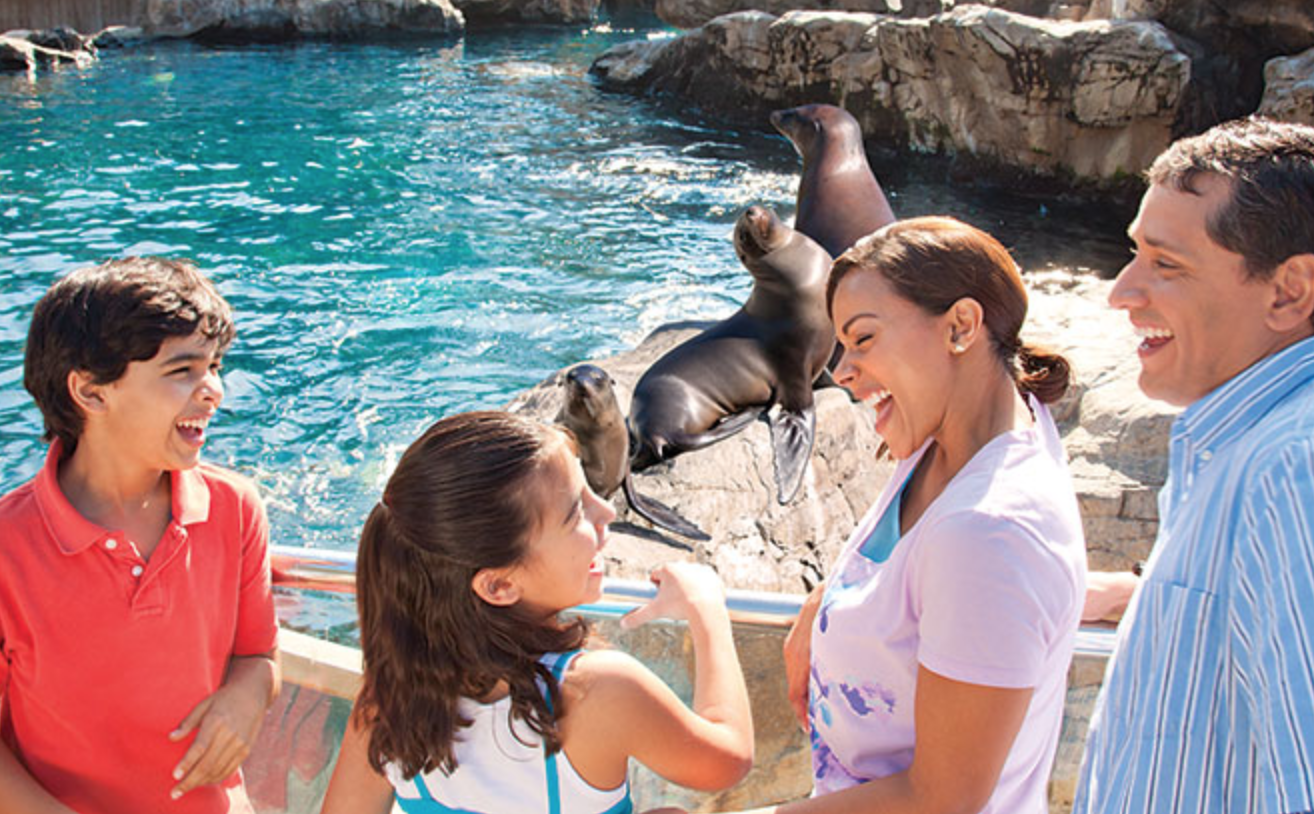 SeaWorld Orlando free teacher card: image of guests meeting sea lions at SeaWorld