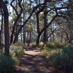 Hiking trails near Orlando