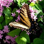 Free entry days at Leu Gardens