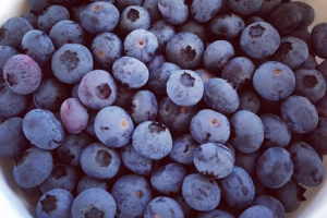 Pick your own blueberries near Orlando